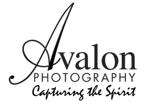 Avalon Equine Photography